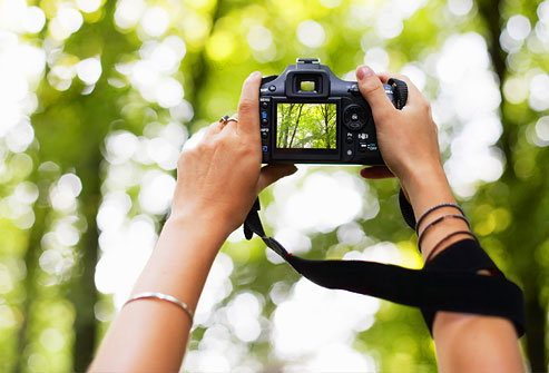 getty_rr_photo_of_woman_photographing_trees