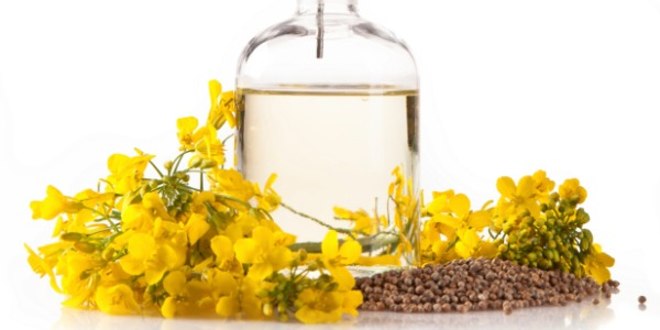 canola-oil_article